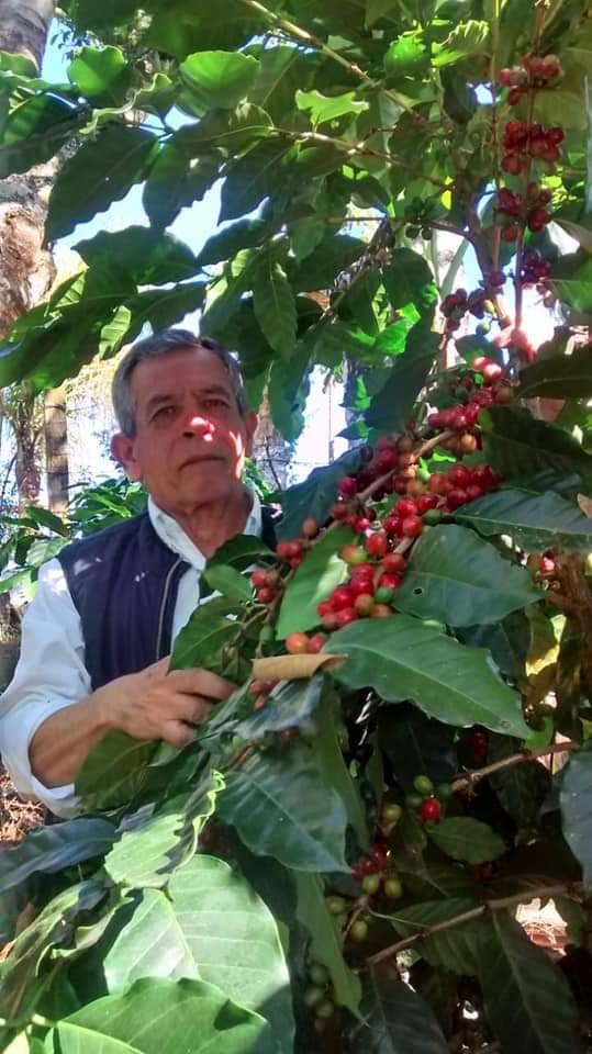 PREVÉN CAÍDA DEL 35 POR CIENTO EN PRODUCCIÓN DE CAFÉ